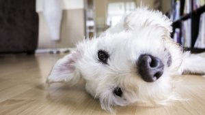 Tenant Responsibilities with Pets