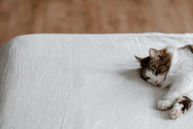 If you intend on allowing pets in your rental unit be sure to include a pet policy in the lease